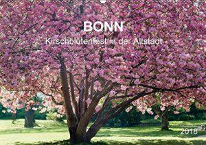 Bonner Kirschblütenfest in der Altstadt für das ganze Jahr!